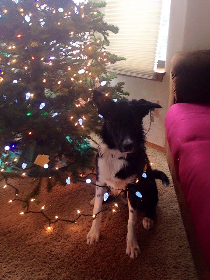 Dogs and Christmas2