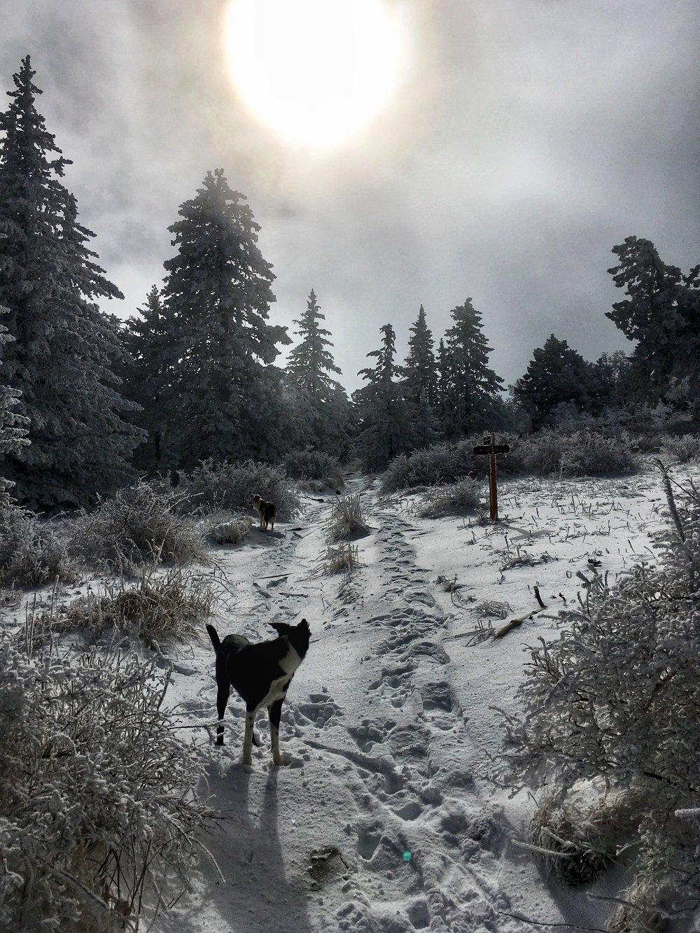 5. Ellis Trail