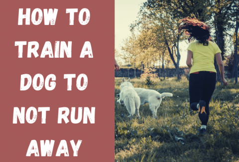 dog not run off