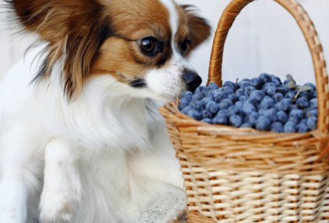 dog berries