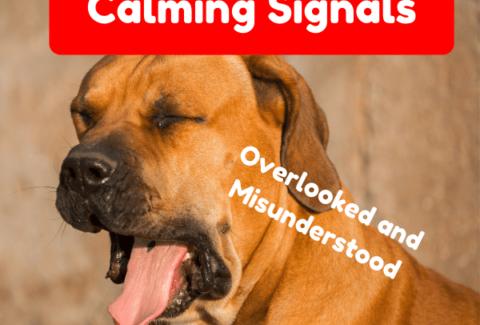 calming signal dog