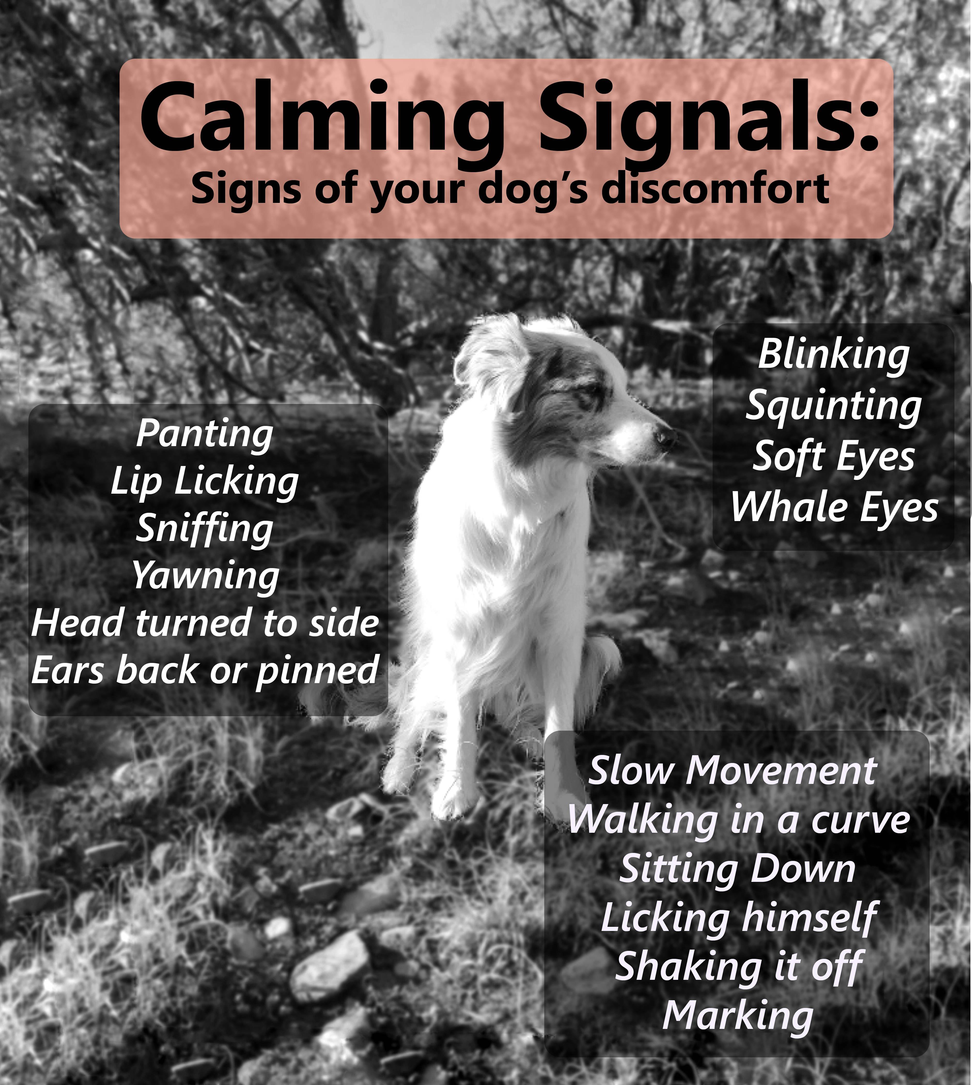 Calming signals