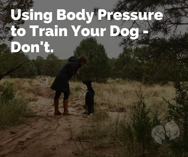 Moving Your Dog With Body Pressure - Please Don't