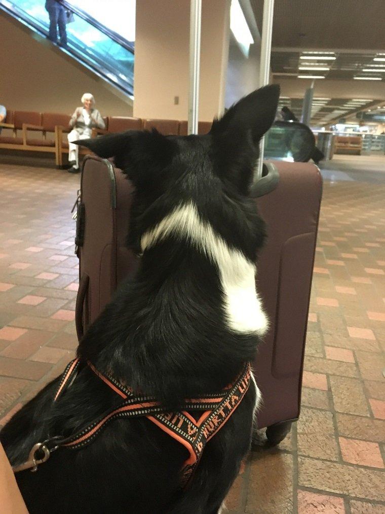 dog albuquerque airport