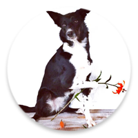 SpiritDog Training LLC | Albuquerque Dog Training