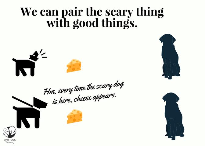 dog_reactivity