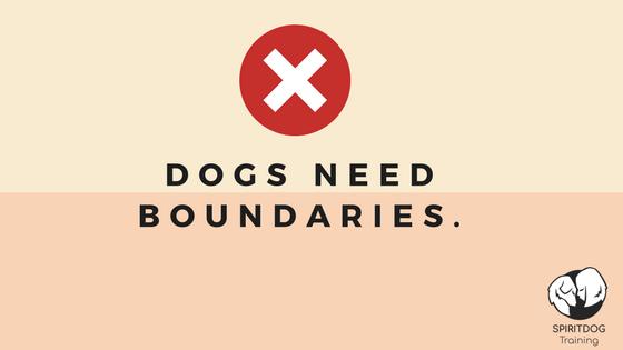 dogs need boundaries