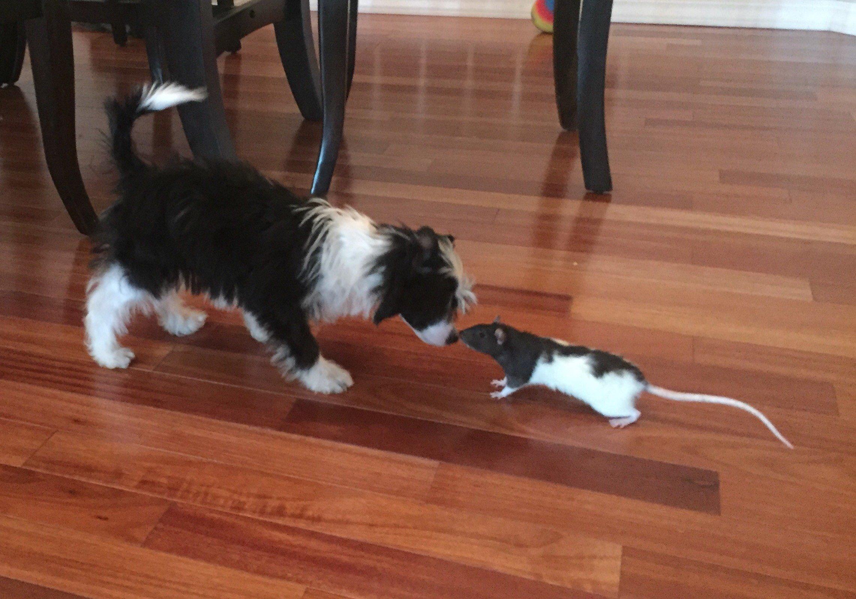 puppy training albuquerque