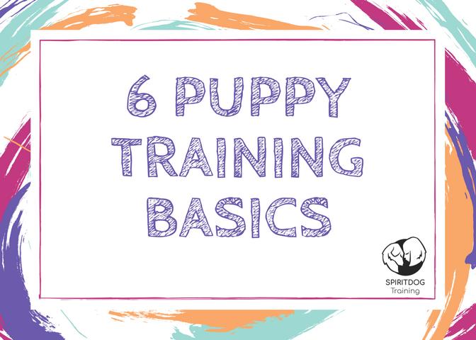 puppy_training_albuquerque