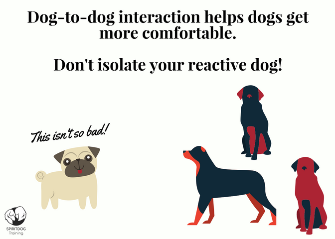 reactive_dog_training