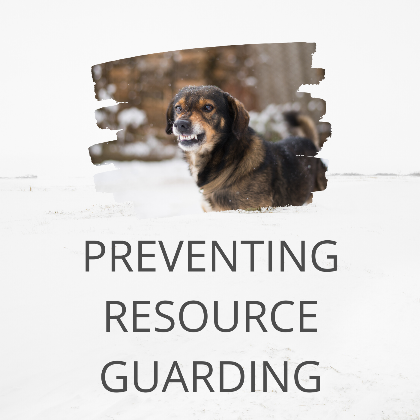 resource guarding dogs
