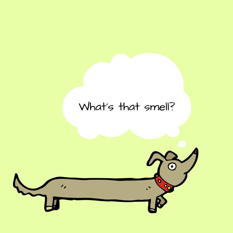 sniff walks