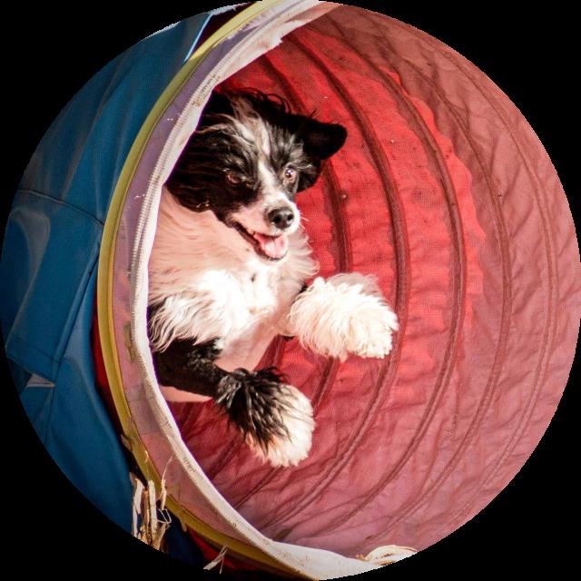 dog agility albuquerque