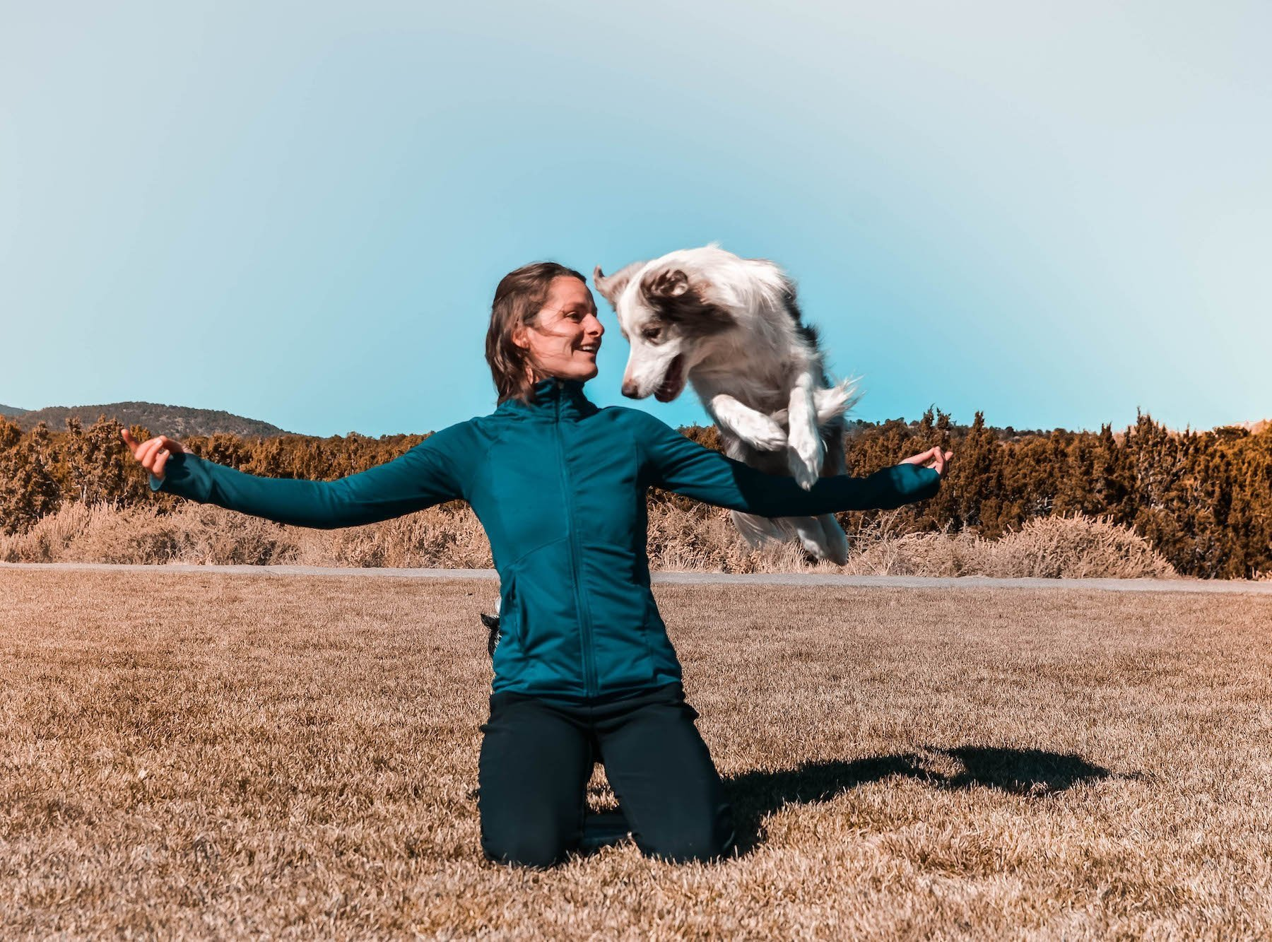 dog jump arm