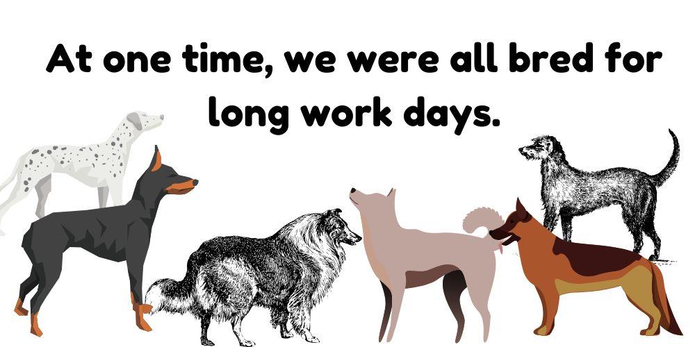 working dog breeds