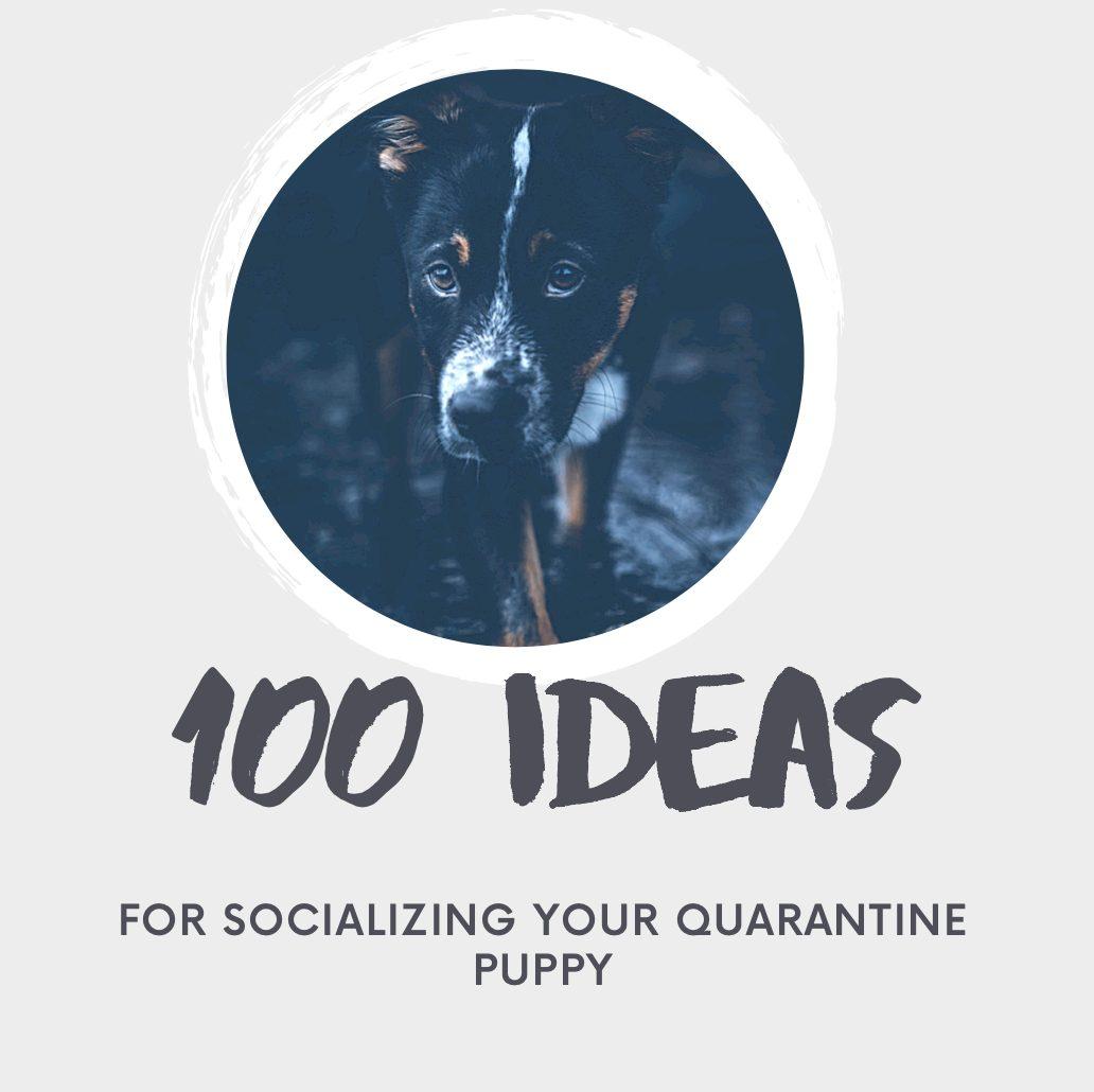 socialization puppy