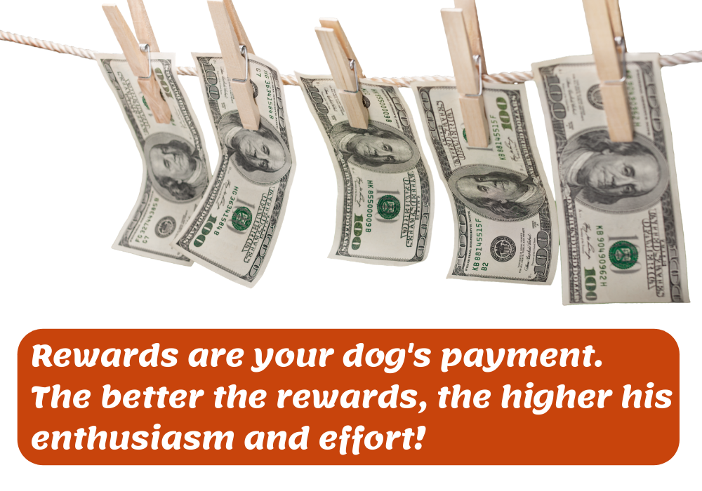 reward dog