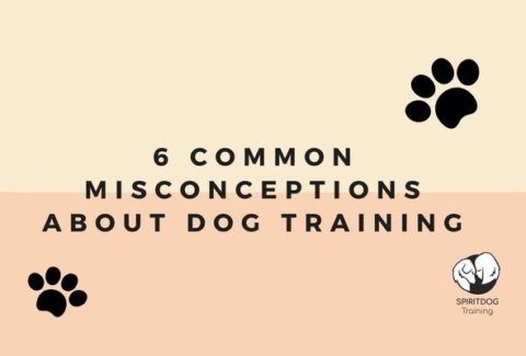6 Common Misconceptions About Dog Training