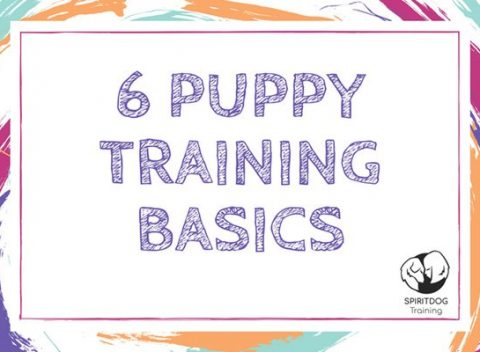 6 Puppy Training Basics