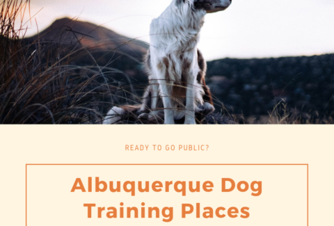 albuquerque dog training places