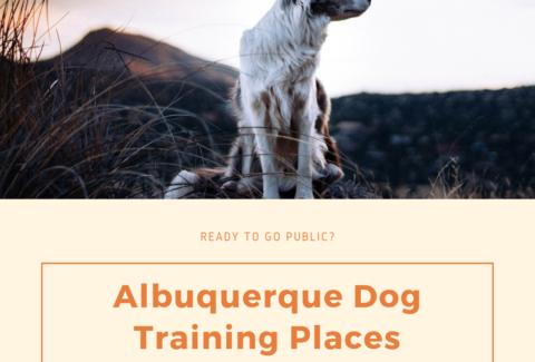 albuquerque dog training places