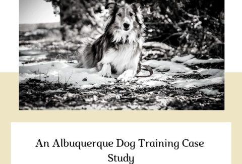 An Albuquerque Dog Training Case Study