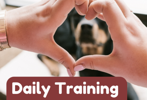 daily training games