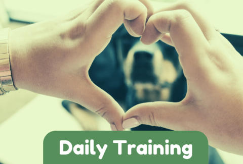 Daily dog Training Games Part 3-2