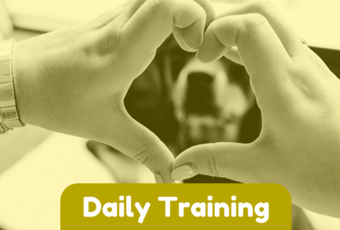 Daily dog Training Games Part 3