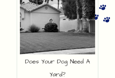does your dog need a yard?