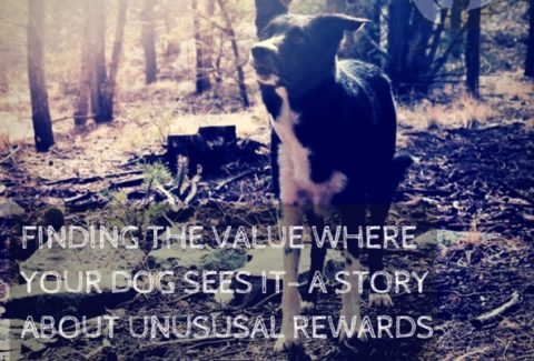 Finding The Value Where Your Dog Sees It A Story About Unusual Rewards