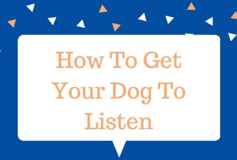 How To Get Your Dog To Listen
