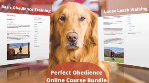 Online_Dog_training_course