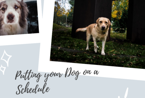 Putting your Dog on a Schedule
