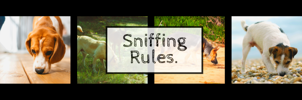 dogs sniffing