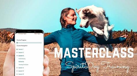 Spiritdogtraining Ads (2) (1)