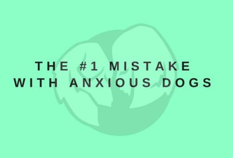 The 1 Mistake With Anxious Dogs