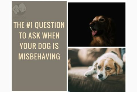 The 1 Question To Ask When Your Dog Is Misbehaving