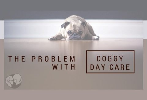 The Problem With Doggy Daycare