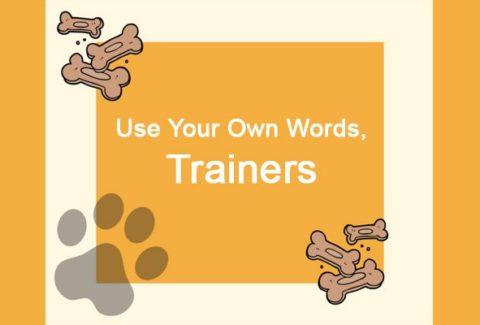 Use Your Own Words Trainers