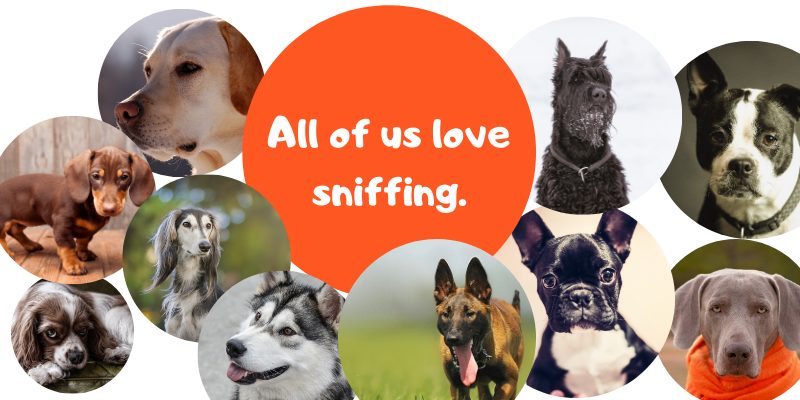all dogs sniff