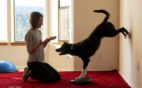 dog trainer with black border collie