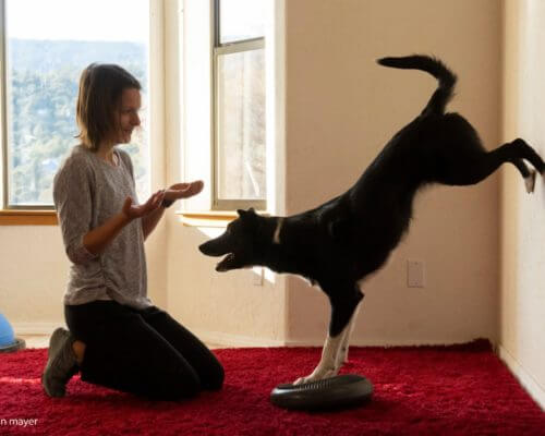 clicker_training_border_collie-scaled