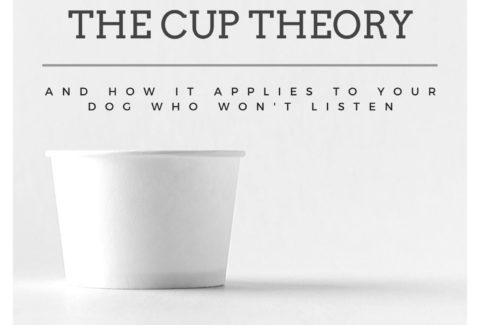 cup-theory-dog-doesnt-listen