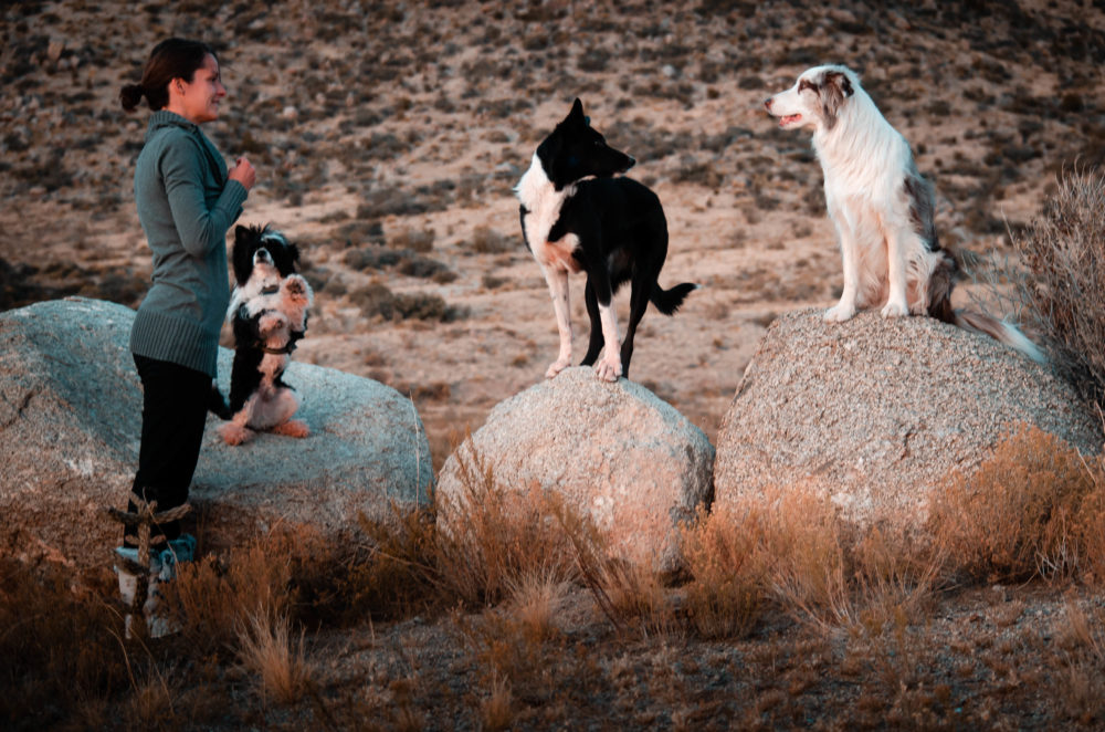 dog trainer with 3 dogs doing on rocks