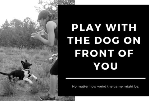 play with the dog on front of you