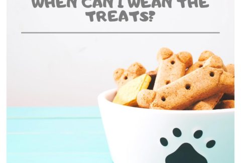 stop-treats-dog