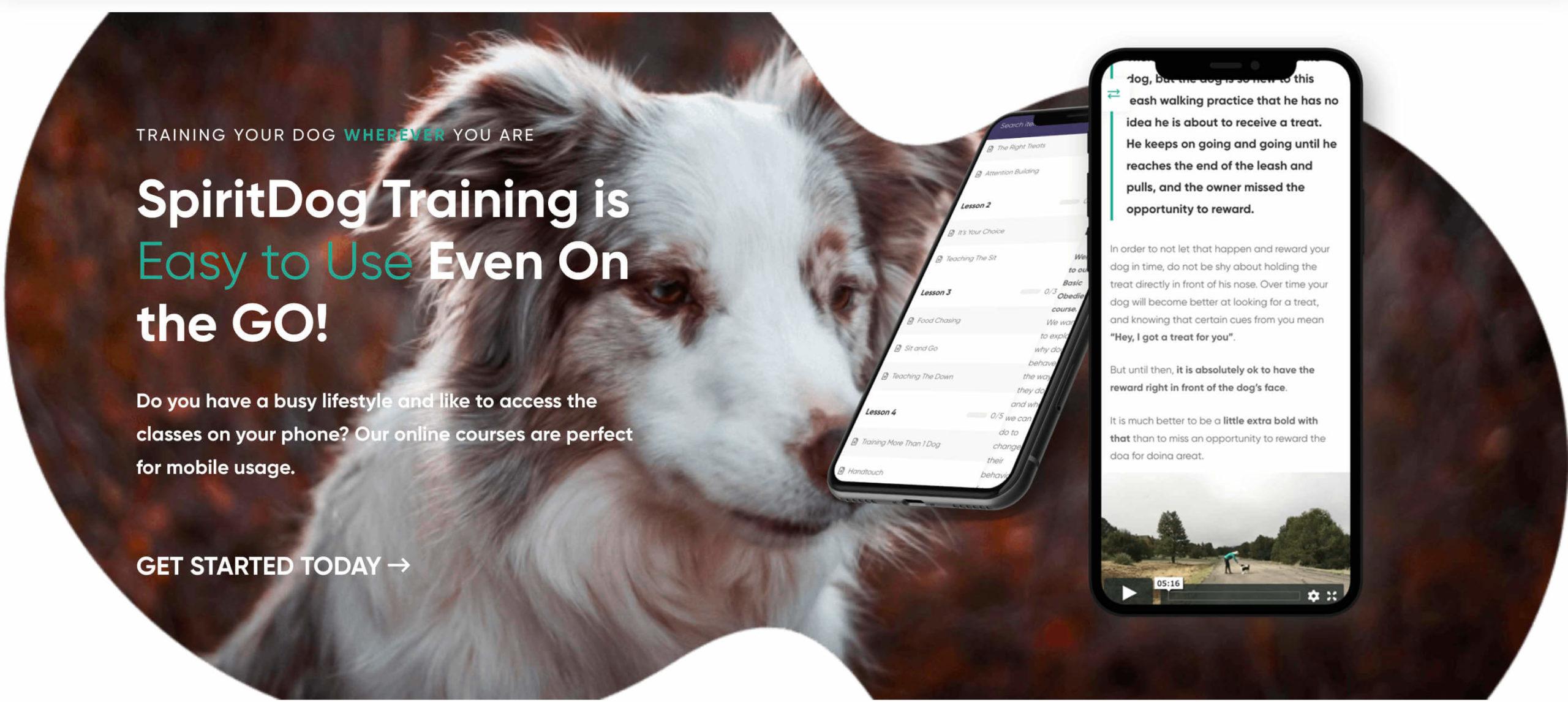 spiritdogtraining.com