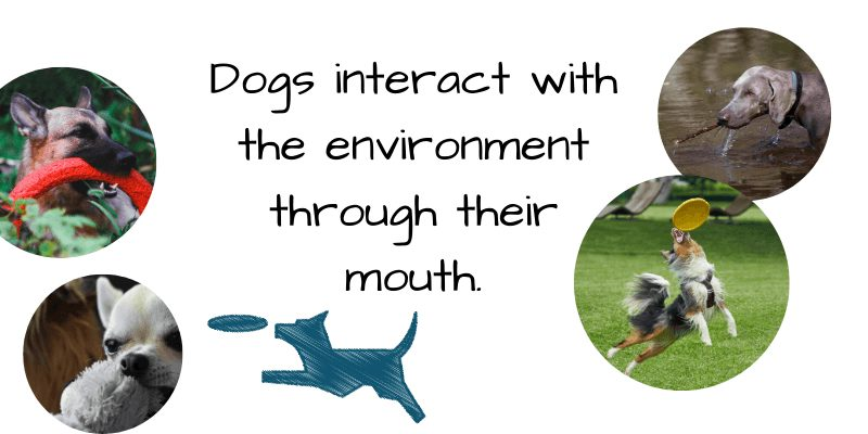 dogs environment