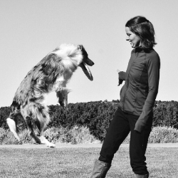 dog trainer and dog doing a trick
